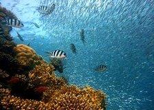 サンゴ(コーラル)のリフォーム 特徴・種類やどんなアクセサリーに生まれ変わるか徹底解説!