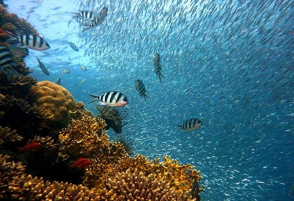 珊瑚(コーラル)のリフォーム|特徴・種類やどんなアクセサリーに生まれ変わるか徹底解説!
